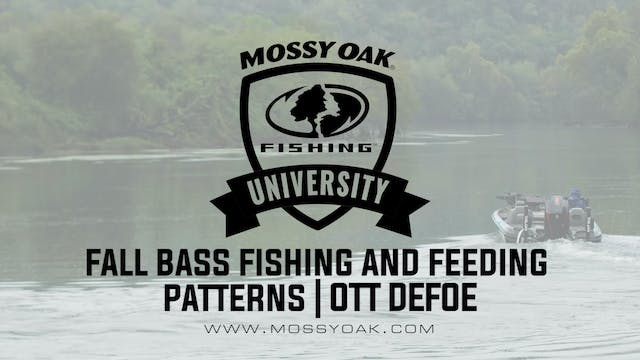 What Do Bass Eat in the Fall - Ott De...