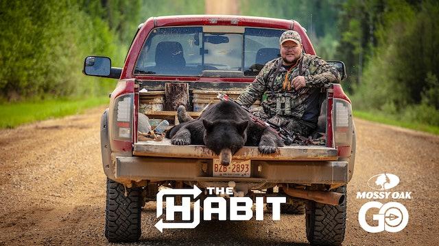 Alberta Bears • The Habit