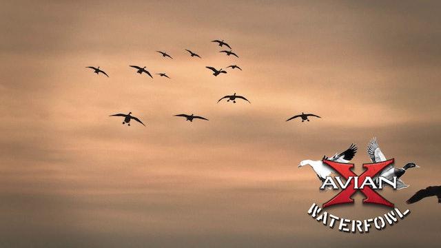 Ontario Pro Staff Hunt • Avian X Waterfowl