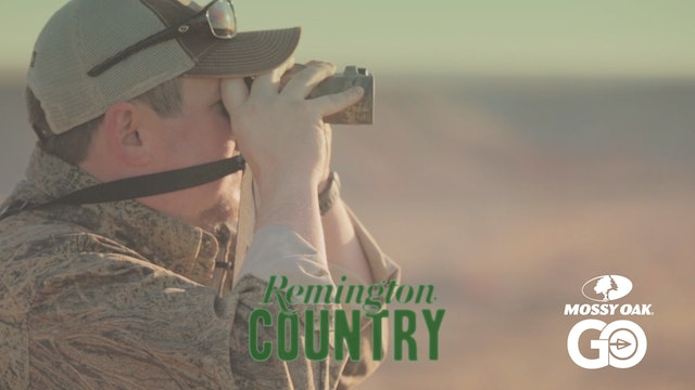 Texas Free – Range Aoudad Sheep • Remington Country
