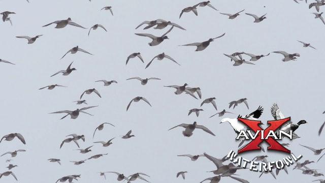 Running Cold • Avian X Waterfowl