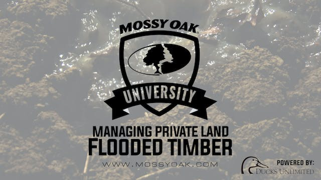 How to Manage Flooded Timber | Proper...