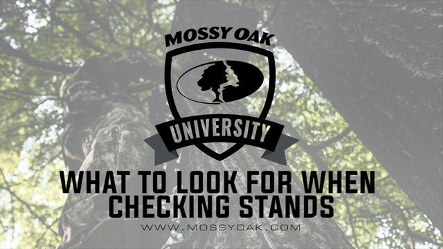 What To Look For When Checking Stands
