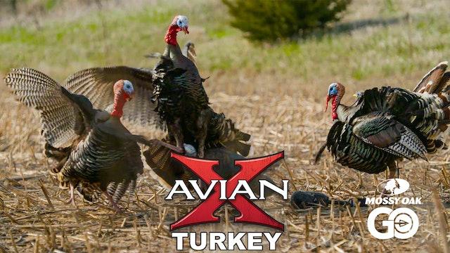 Walk In • Avian X