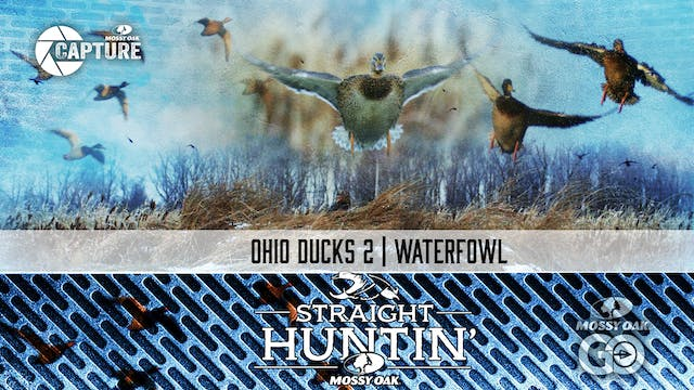 Ohio Ducks 2 • Waterfowl • Straight H...
