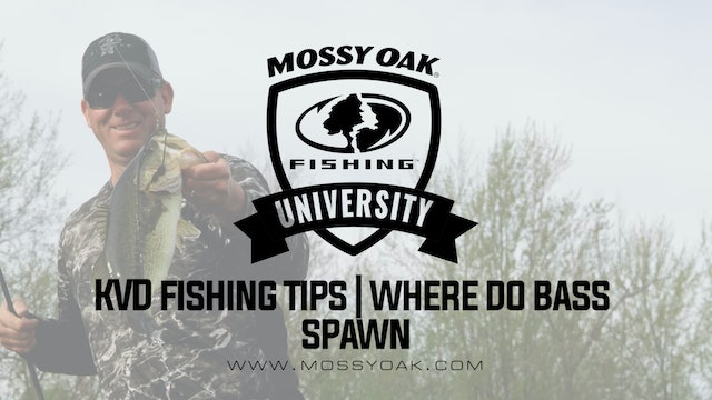KVD - Spring Bass Fishing Tips - Where Do Bass Spawn