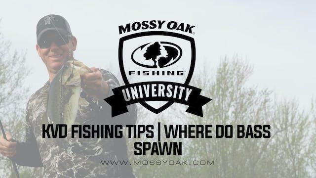 KVD - Spring Bass Fishing Tips - Wher...
