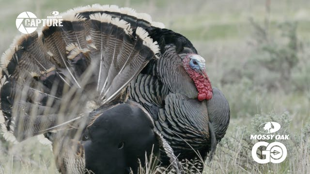 Black Hills Magic • Wyoming Turkey Hu...