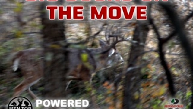 Missouri Whitetail Rut Action • MTN.Top Outdoors