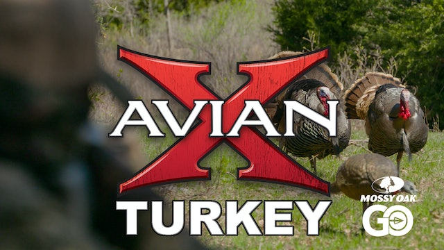Avian X • Turkey