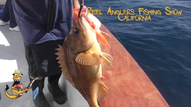 Monster Yellowtail • Reel Anglers Fishing Show California