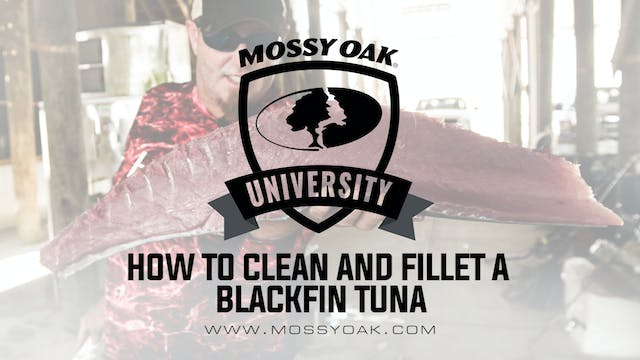 How To Clean and Fillet a Blackfin Tuna