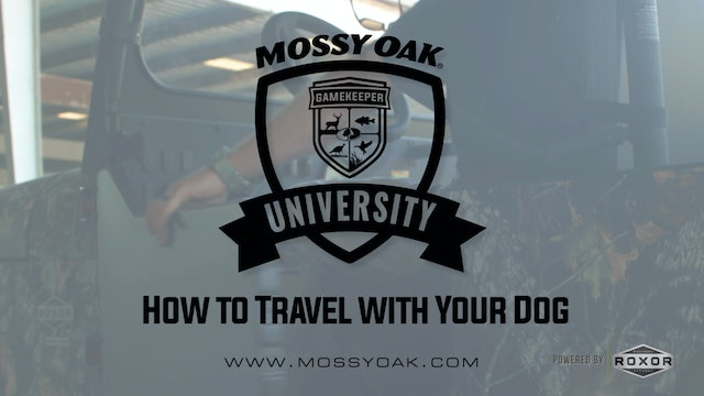 How to Travel with Your Dog • Mossy Oak Univeristy