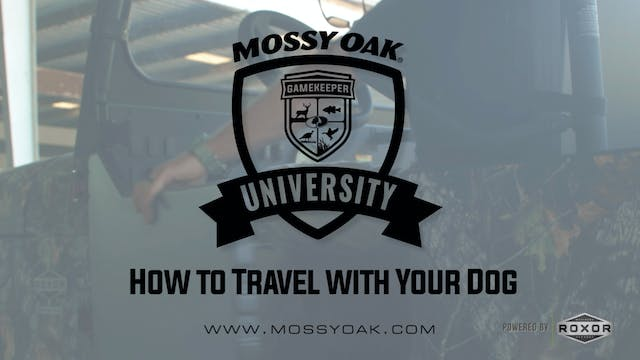 How to Travel with Your Dog • Mossy O...