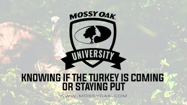 Knowing if the Gobbler is Coming or Staying Put