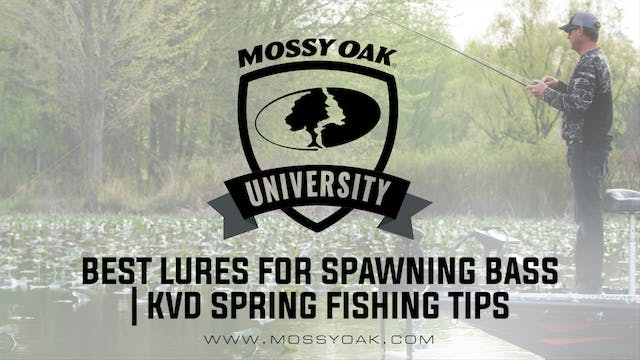 Best Lures for Spawning Largemouth Ba...