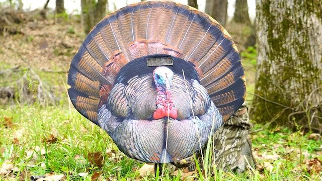 Montana • Fanatic Turkey Decoy