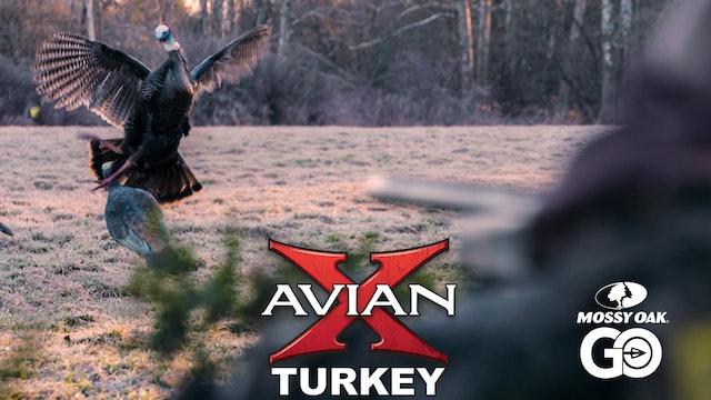 RECRUITMENT • Avian X