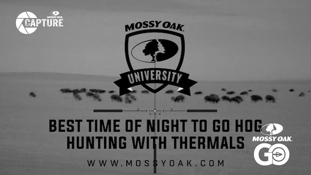 Best Time Of Night To Hunt Hogs With Thermal Night Vision.Mp4