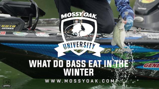 What Do Bass Eat in the Winter - Ott DeFoe Fishing Tips