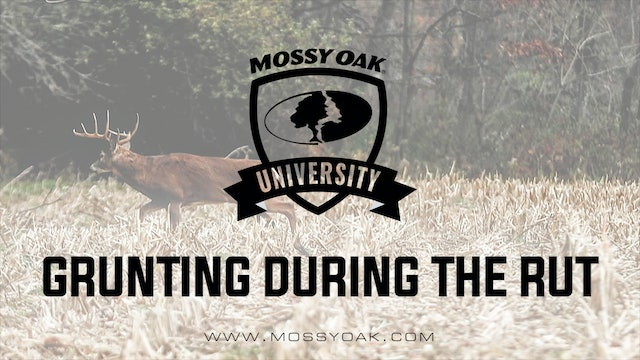 Grunting During The Rut | Whitetail Calls