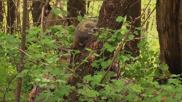 Uphill or Downhill • Turkey Hunting i...