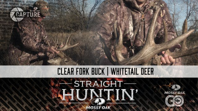 Clear Fork Buck • Whitetail Deer • St...