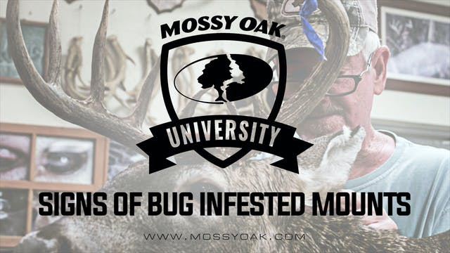 Signs of Bug Infested Mounts