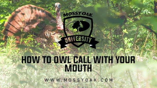 How to Owl Call with Your Mouth
