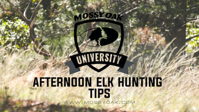 6 Afternoon Elk Hunting Tips