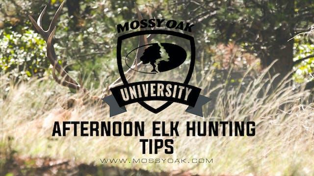 6 Afternoon Elk Hunting Tips