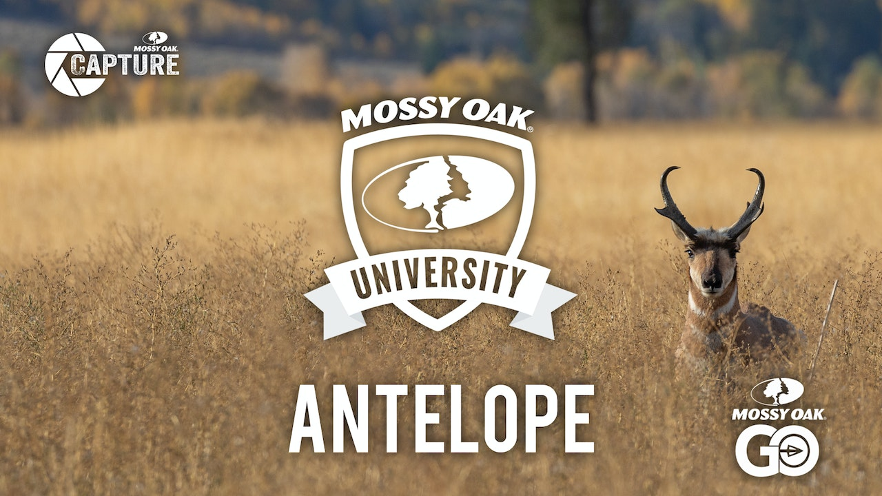 Antelope • Mossy Oak University