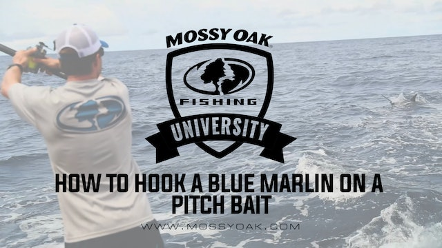 How to Hook a Blue Marlin on a Pitch Bait • Mossy Oak University