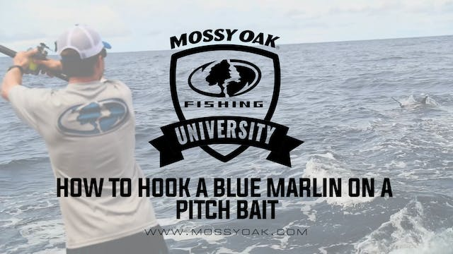 How to Hook a Blue Marlin on a Pitch ...