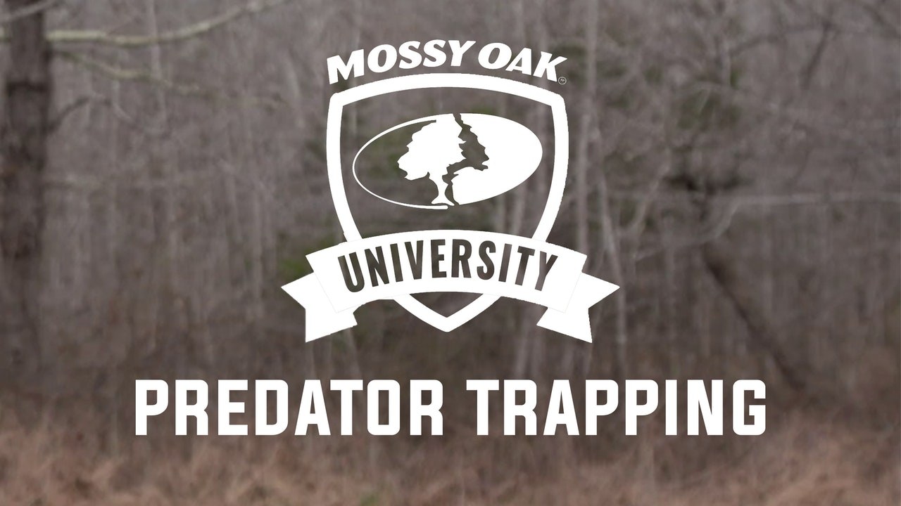 Predator Trapping