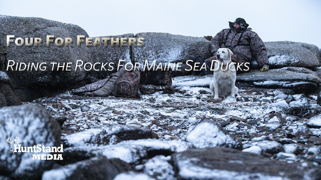 Riding the Rocks For Maine Sea Ducks • Four For Feathers