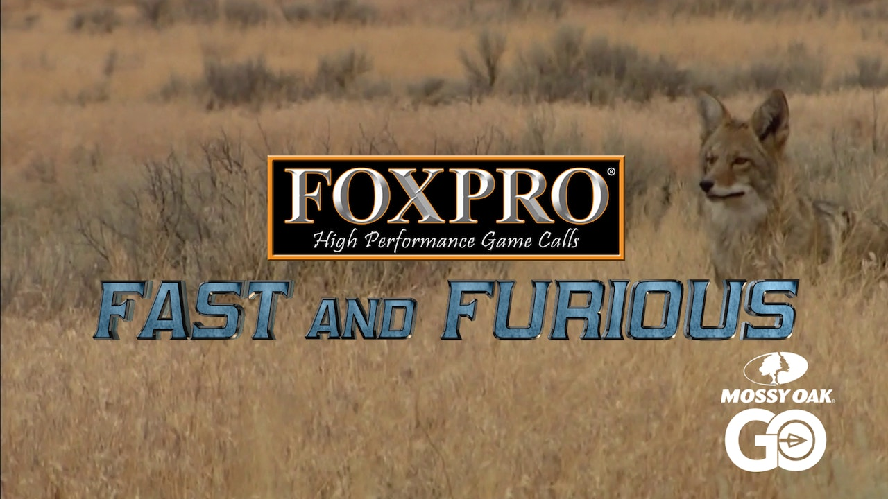 FOXPRO'S Fast and Furious