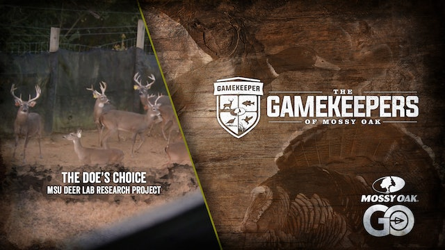 The Doe's Choice • MSU Deer Lab Research Project