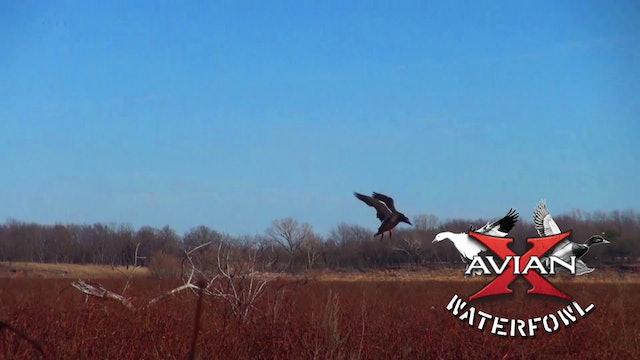Successful Public • Avian X Waterfowl