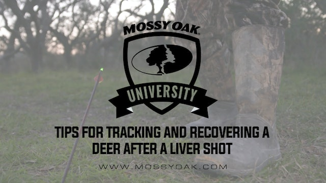 Tracking a Deer That Has Been Shot in The Liver