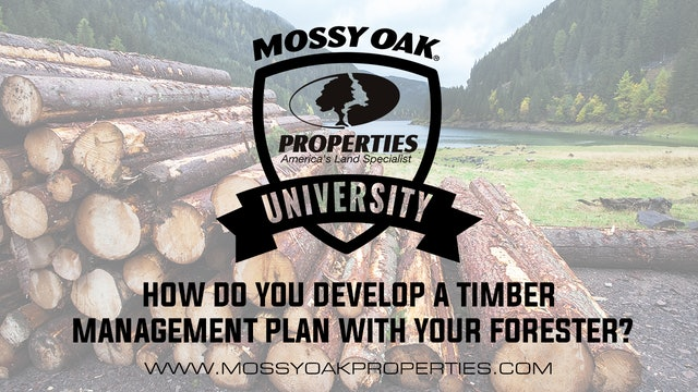 How Do You Develop A Timber Management Plan With Your Forester?