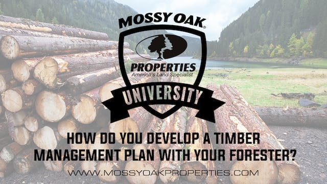 How Do You Develop A Timber Managemen...
