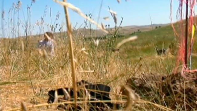 No Regrets, Whitetail Bucks in Wyoming