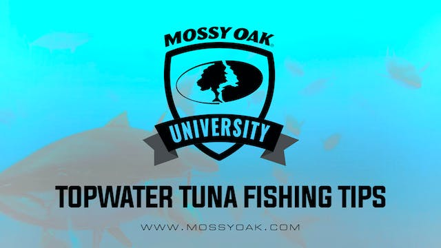 Topwater Tuna Fishing Tip