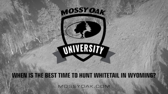 When is the Best Time to Hunt Whitetail in Wyoming