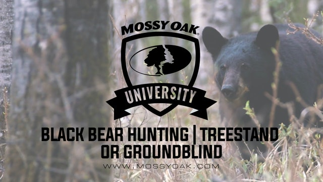 Black Bear Hunting Treestand vs Ground Blind • MOU