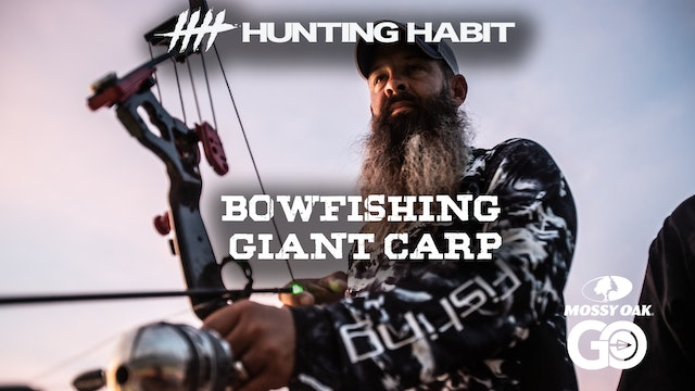 Hunting Habit · Bowfishing Giant Carp
