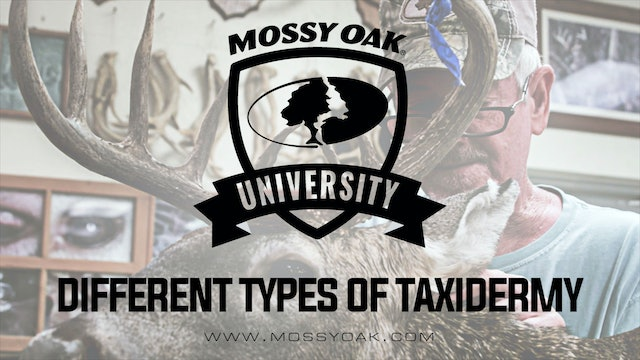Different Types of Taxidermy