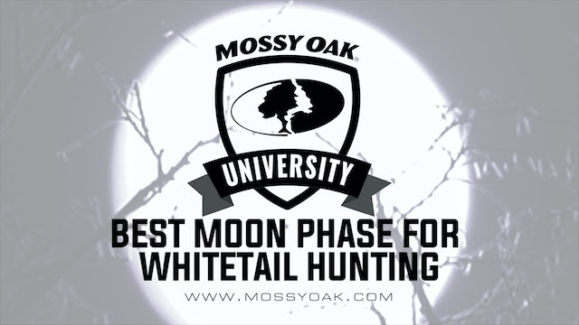 Best Moon Phase for Whitetail Deer Hunting