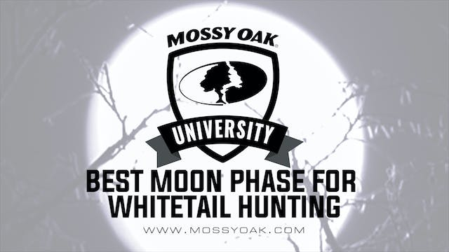 Best Moon Phase for Whitetail Deer Hu...
